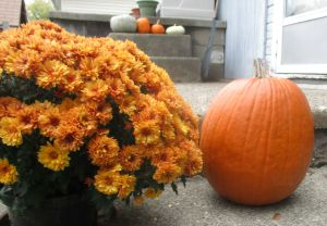 pumpkin-patch-edit-blog-post