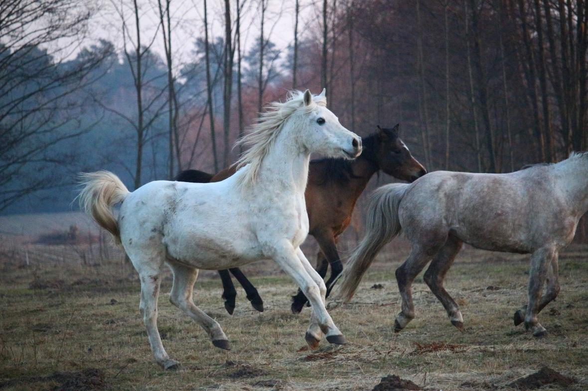 horse-2065831.jpg