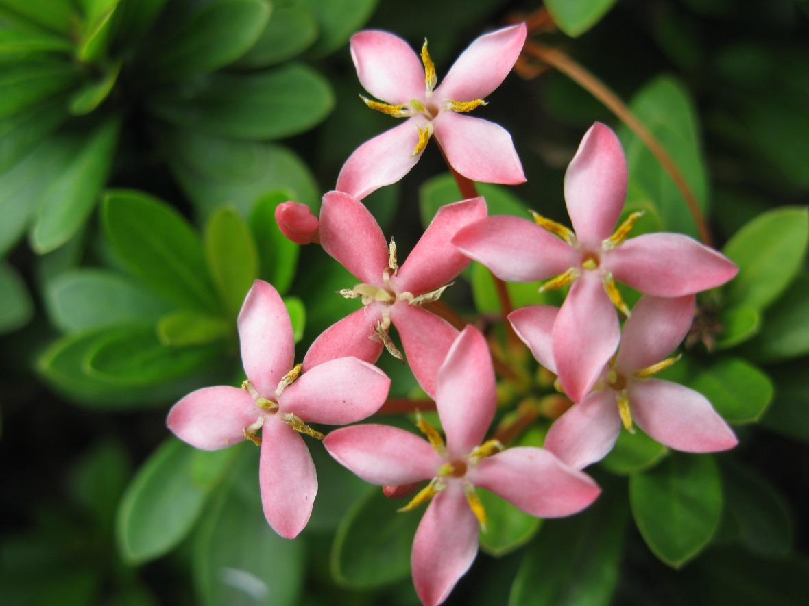 flowers-274820