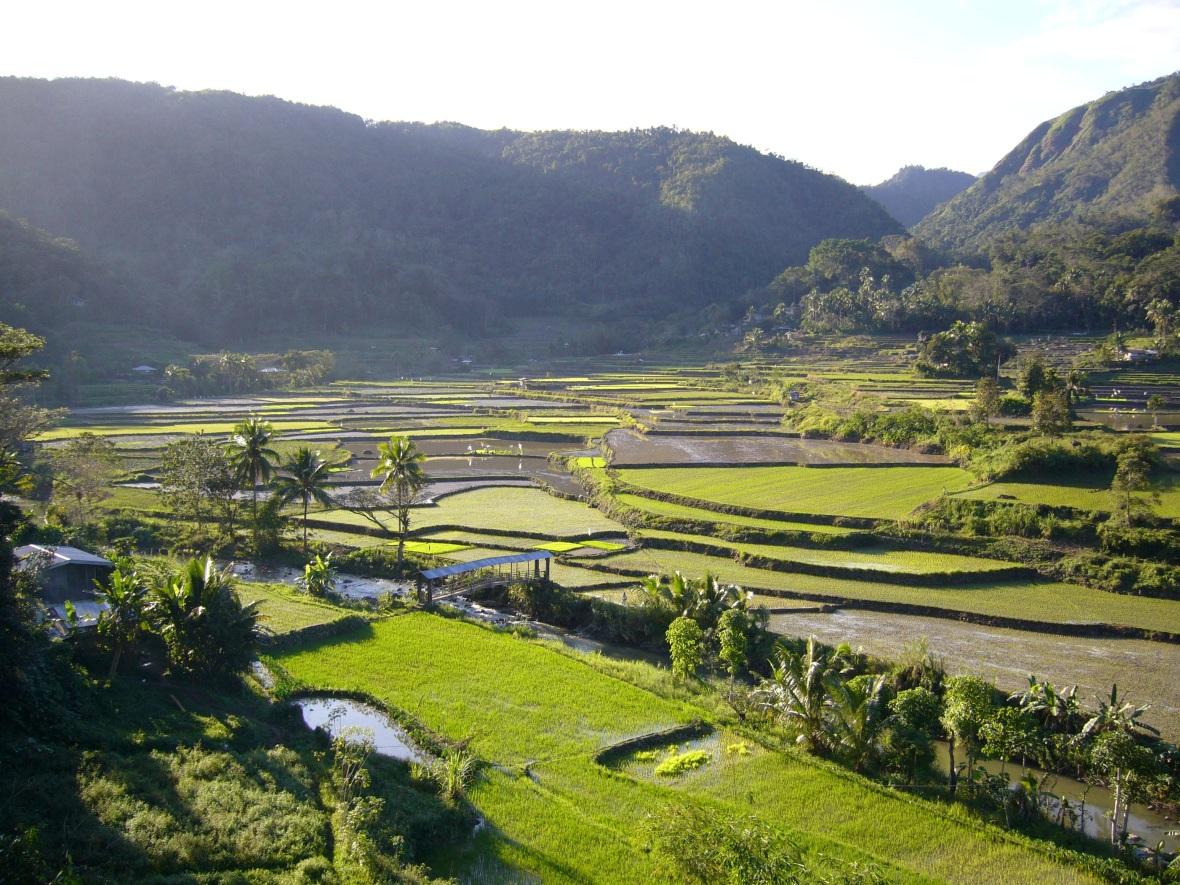 rice-fields-2806859