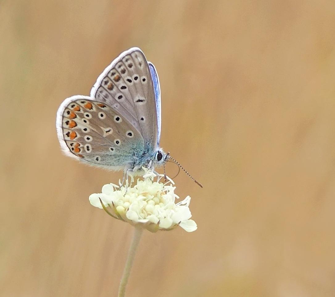 butterfly-1553031