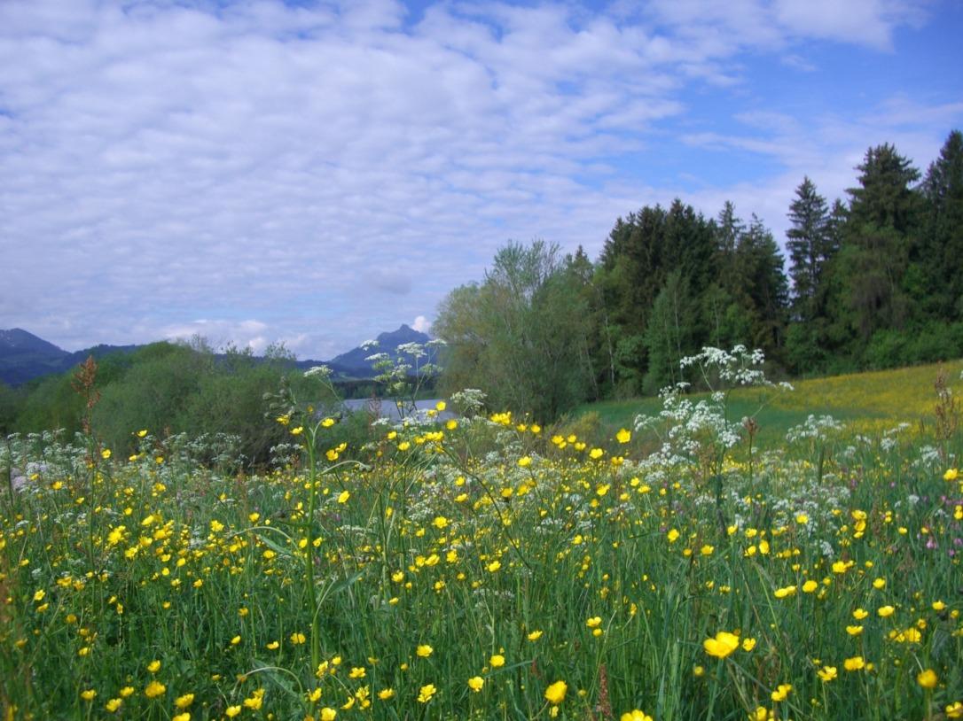 flower-meadow-247750