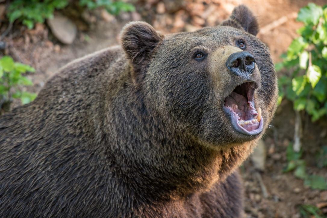 bear-3405945