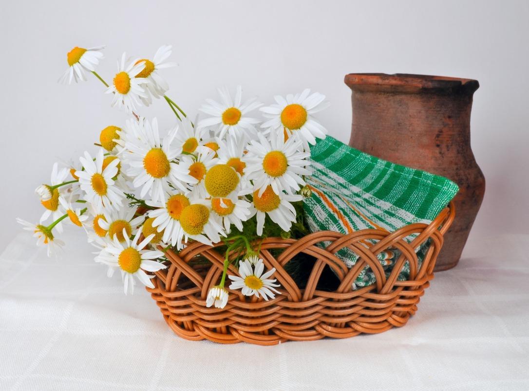 daisies-314435